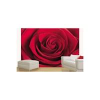 Kırmızı Güller Duvar Kaplaması 8 Parça / 366 X 254 Cm