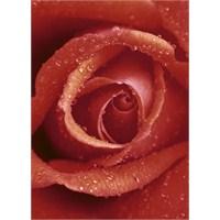 Rose Duvar Kaplaması 4 Parça / 183 X 254 Cm