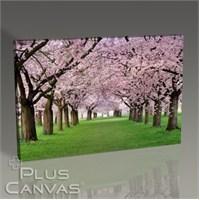 Pluscanvas - Cercis Trees Tablo