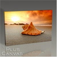 Pluscanvas - Sea Shells On Sand Tablo