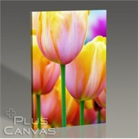 Pluscanvas - Colored Tulips Tablo