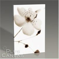 Pluscanvas - Celeste Iıı Tablo