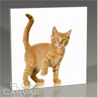 Pluscanvas - Tawny Cat Tablo