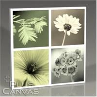Pluscanvas - Quattro Flowers I Tablo