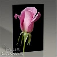 Pluscanvas - Pink Rose On Black Tablo