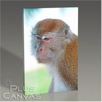 Pluscanvas - Oktay Toygar - Malezia - Monkey I Tablo
