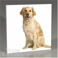 Pluscanvas - Golden Retriever Tablo