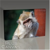 Pluscanvas - Oktay Toygar - Malezia - Monkey Iıı Tablo