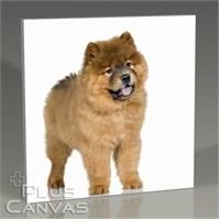 Pluscanvas - Puffy Dog Tablo