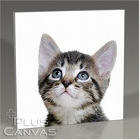 Pluscanvas - Blue Eyed Tabby Cat Tablo