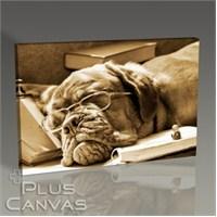 Pluscanvas - Doggy Dog Tablo