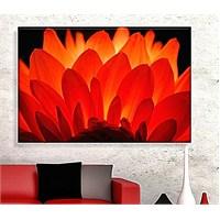 Kırmızı Çiçek Dekoratif Kanvas Tablo