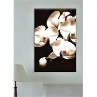Siyah Beyaz Çiçek Dekoratif Kanvas Tablo