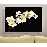 Beyaz Çiçek Kanvas Tablo