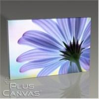 Pluscanvas - Flower Iıı Tablo