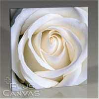 Pluscanvas - White Rose Tablo