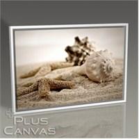 Pluscanvas - Kum Üzerinde Deniz Kabukları Tablo