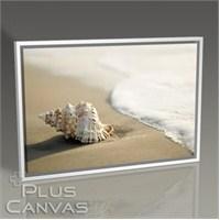 Pluscanvas - Seashell On The Beach Tablo