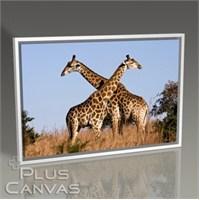 Pluscanvas - Giraffe Ithala Tablo