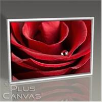 Pluscanvas - Red Rose Close Up I Tablo
