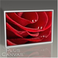 Pluscanvas - Red Rose Close Up Iı Tablo