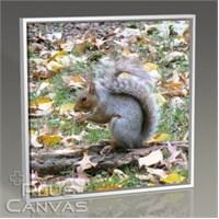 Pluscanvas - Oktay Toygar - Squirrel At Central Park New York Tablo