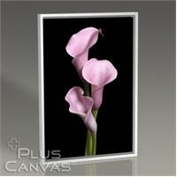 Pluscanvas - Pink Lillies Tablo