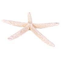 Deniz Yıldızı- Parmak/Orta Boy