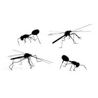 Böcek Raptiye 4'Lü Set