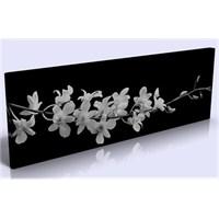 Arte Siyah Beyaz Çiçek Kanvas Tablo