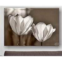 Sepia Tulips Kanvas Tablo