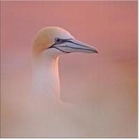 Kuş Kanvas Tablo