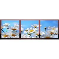 Beyaz Çiçekler Kanvas Tablo