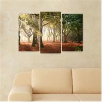 Dekoriza Ağaçlardan Güneş Hüzmesi 3 Parçalı Kanvas Tablo 80X50cm