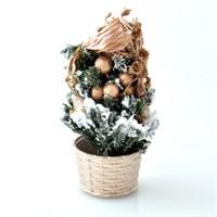 Mini Çam Ağacı