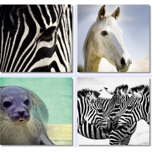 Fotocron Zebra Set 4'lü Tablo