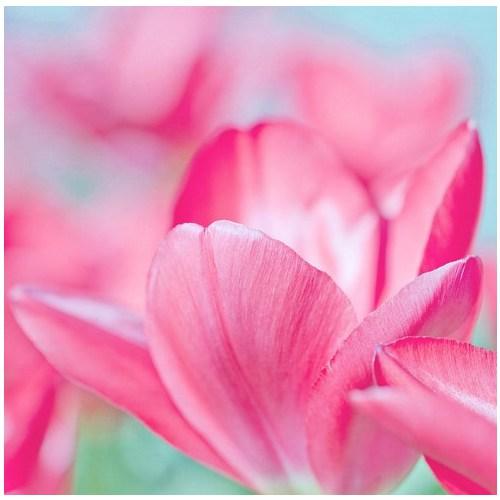 Fotocron Dekoratif Tablo Pembe Çiçek