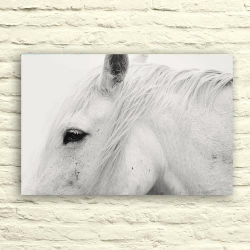 Fotocron Beyaz At Silüet Tablo 24X34 Cm