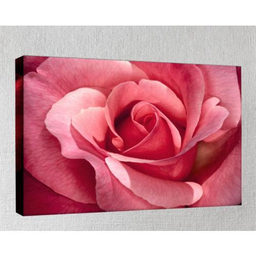 Kanvas Tablo - Çiçek Resimleri - C273