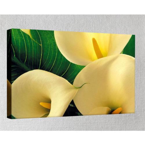 Kanvas Tablo - Çiçek Resimleri - C284