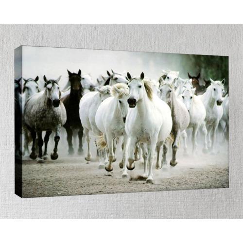 Kanvas Tablo - Hayvan Tabloları - Hy54