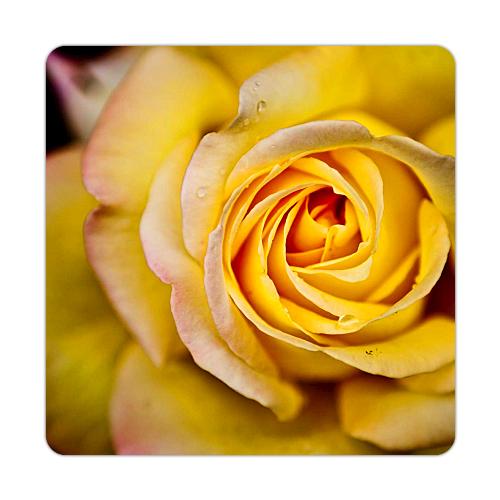 Fotografyabaskı Sarı Gül Bardak Altlığı Baskı 4'lü Set
