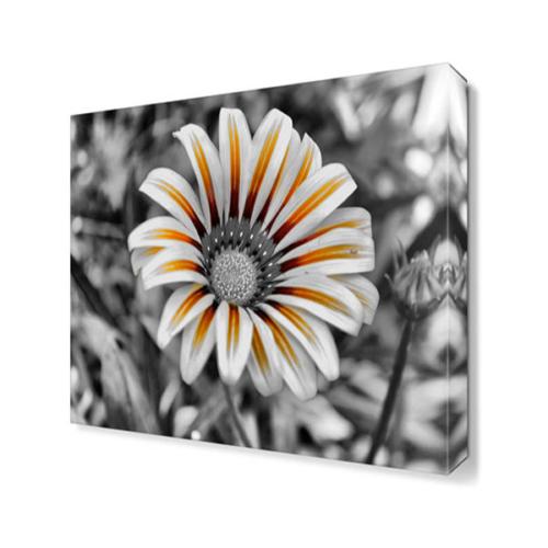 Dekor Sevgisi Renksiz Papatya Canvas Tablo 40x40 cm