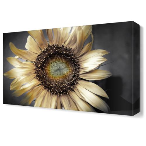 Dekor Sevgisi Beyaz Ay Çiçeği Tablosu 45x30 cm
