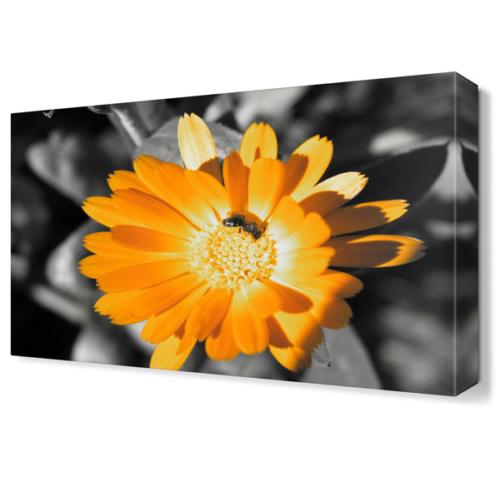 Dekor Sevgisi Sarı Papatya4 Tablosu 45x30 cm