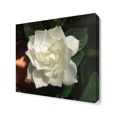 Dekor Sevgisi Gardenya Çiçeği Tablosu 40x40 cm