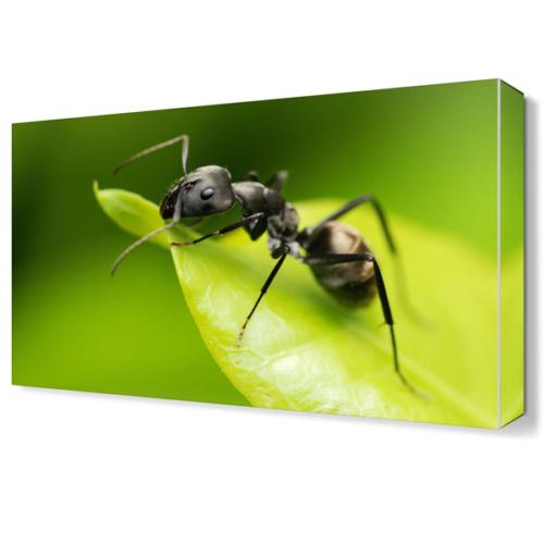 Dekor Sevgisi Karınca Canvas Tablo 45x30 cm