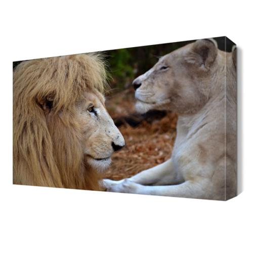 Dekor Sevgisi Yeleli 2 Aslan Tablosu 45x30 cm