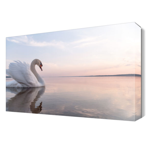 Dekor Sevgisi Kuğu 2 Tablosu 45x30 cm