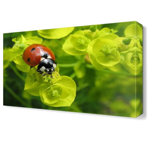 Dekor Sevgisi Uğur Böceği Canvas Tablo 45x30 cm